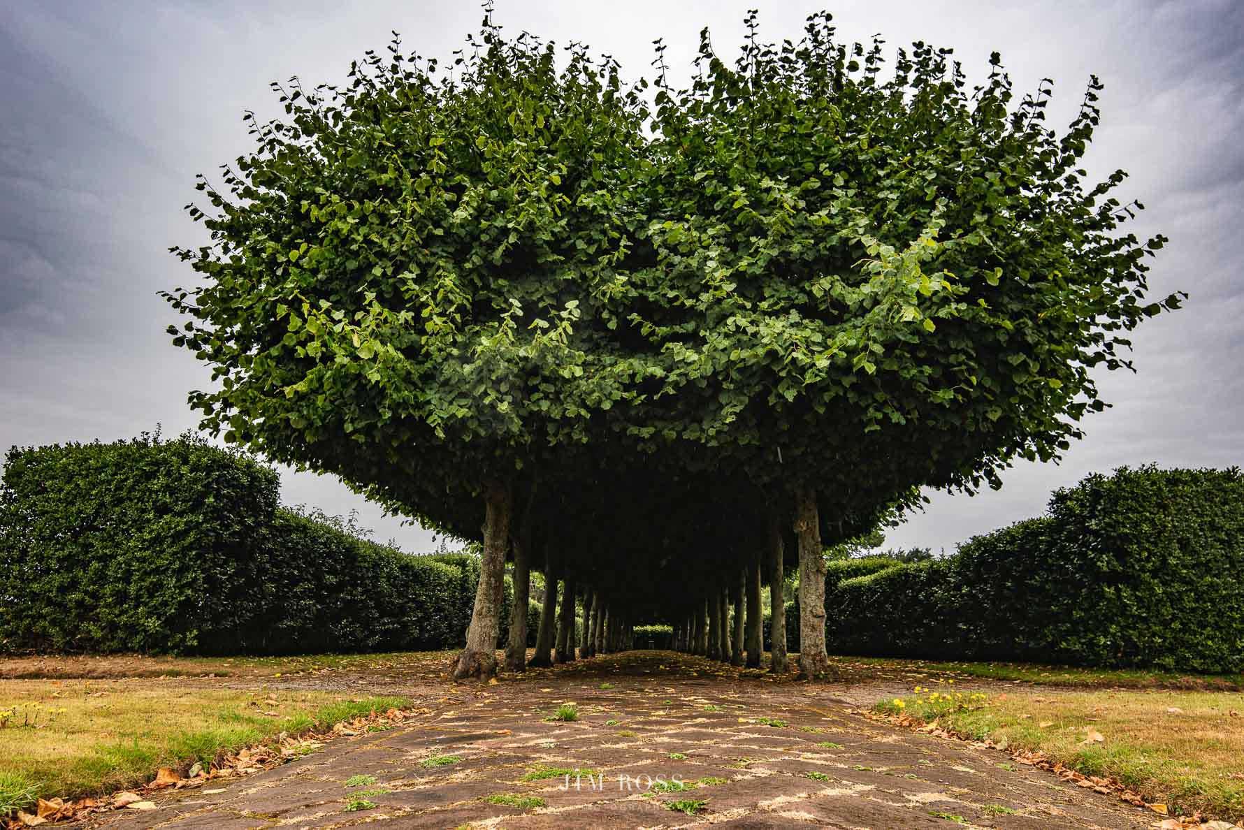 Heart-shaped tree avenue